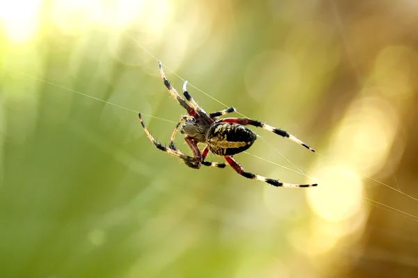 Arachnophilia!