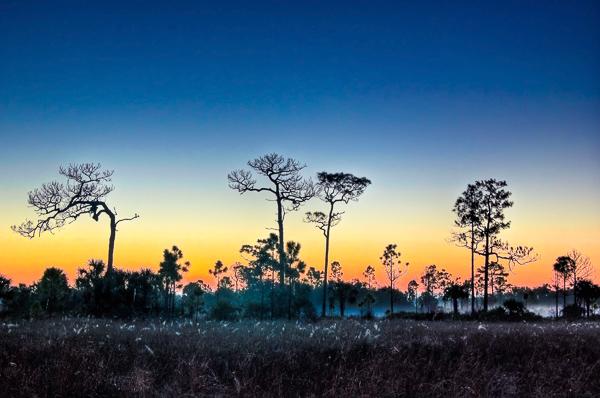 An Amazing Cross-Florida Nature Photography Blitzkrieg!!!