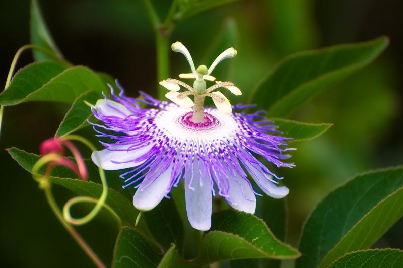 Huge Update! All New North American Native Wildflower Galleries