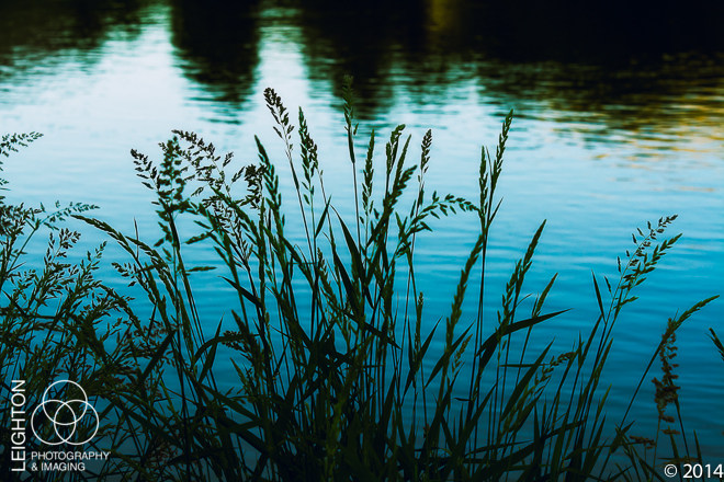 Wild Grasses in the Yakima River Canyon at Dawn