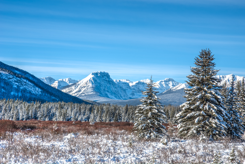 Moose Meadows and the Canadian Rockies in Winter!