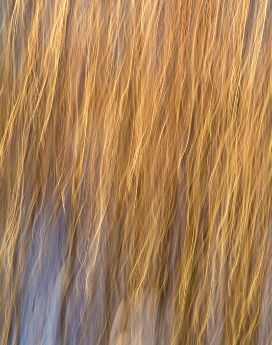 Abstract: Tresses of Pure Light