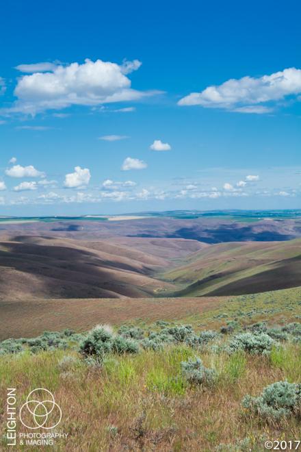 Sagebrush Country