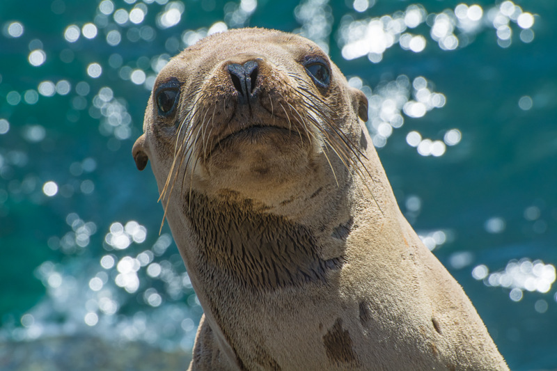 Interesting Nature Facts #56 – Sea Lions