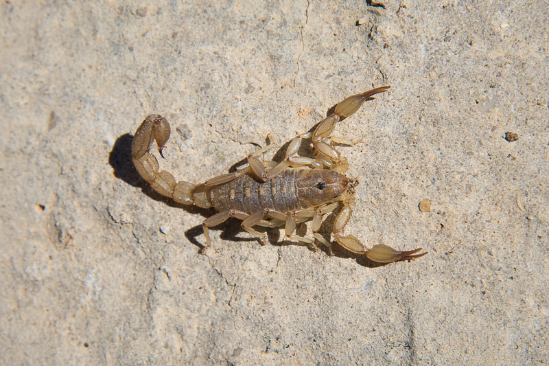Interesting Nature Facts #61 – Scorpions
