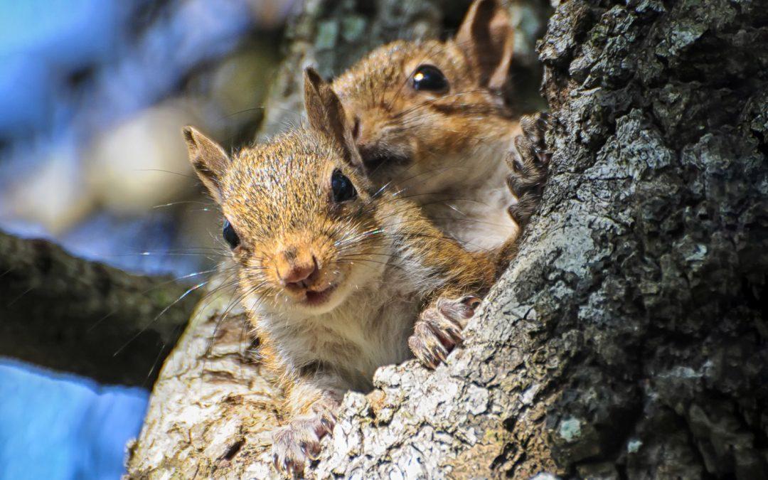 Interesting Nature Facts #67 – Squirrels