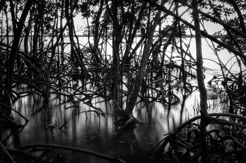 Interesting Nature Facts #83 – Mangroves