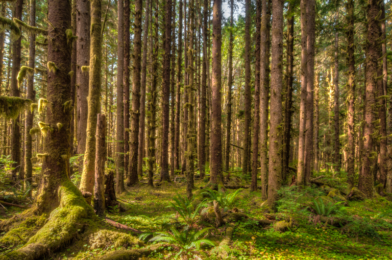 Interesting Nature Facts #111 – Temperate Rainforest