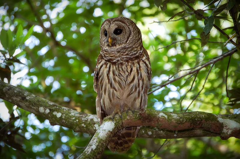 Interesting Nature Facts #27 – Owls