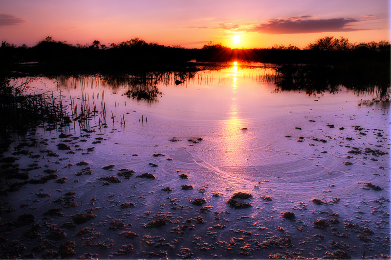 Interesting Nature Facts #64 – Estuaries