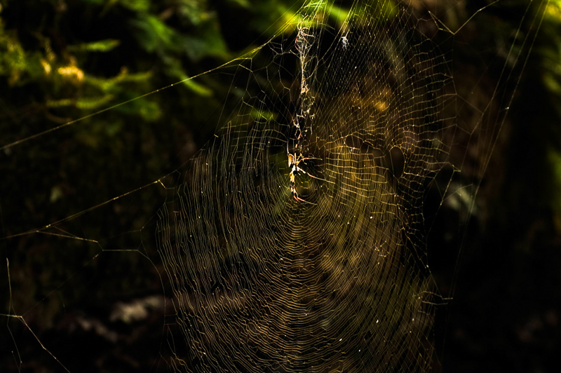 Interesting Nature Facts #137 – Spider Silk
