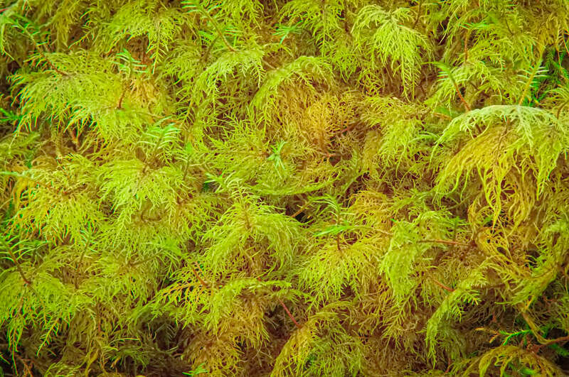 Interesting Nature Facts #159 – Moss